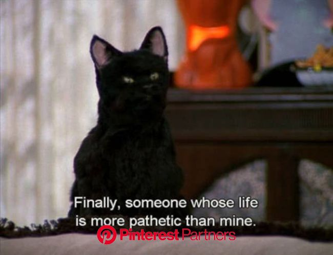 The 40 Greatest Things Ever Said By Salem The Cat | Salem cat, Funny movies, Spirit animal