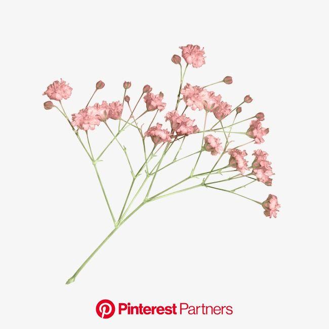 꽃 | 꽃, 드라이 플라워, 꽃 무늬 프린트
