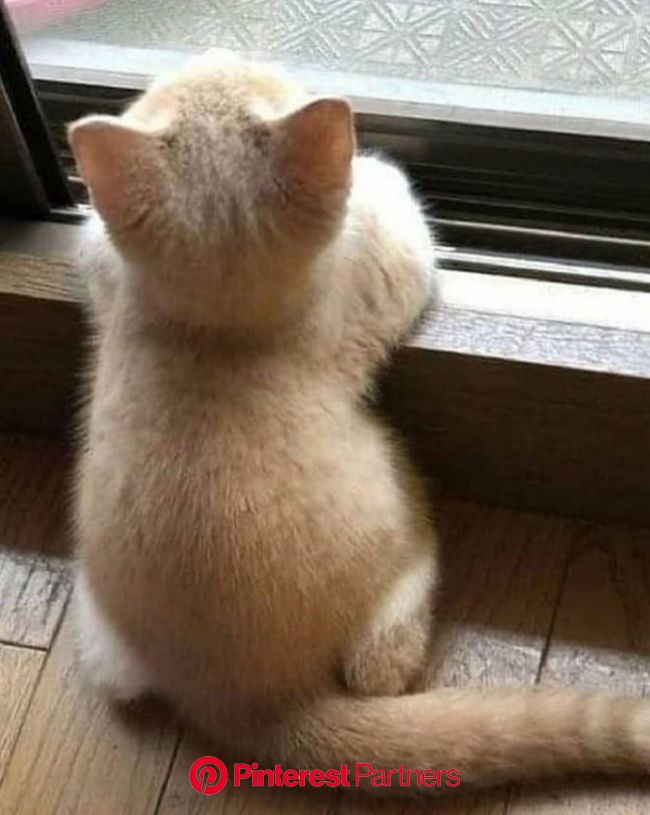 Me waiting for my cargo, Or waiting you to come to my life - Funny | Cute animals, Cute cats, Baby cats