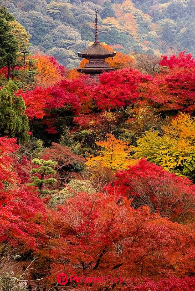 The autumn of Kyoto, Japan... Maybe one day I will be able to see this in real life with my own eyes!   Beautiful places, Scenery, Around the worlds