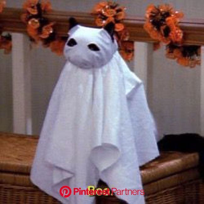 ⸙͎۪۫ matching icons⌇multifandom - ❀ Halloween (Random) pt2;; | Halloween icons, Salem cat, Spooky scary