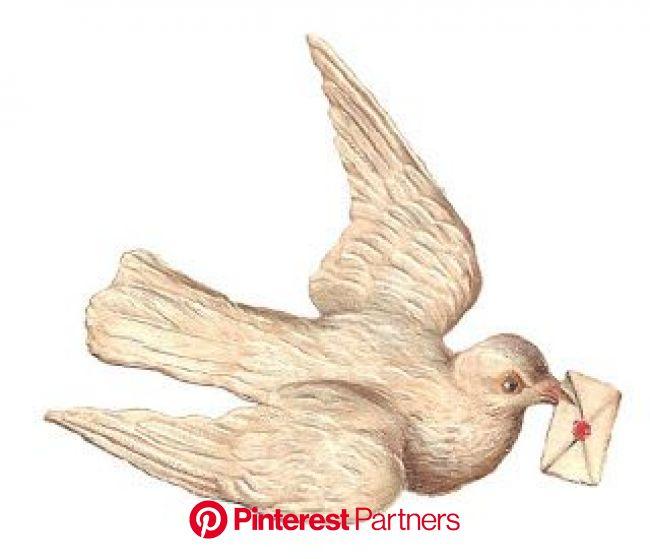 White Dove Digital Image Sending Letter Well Wishes (Antique Images) | Antique images, Dove illustration, Bird images