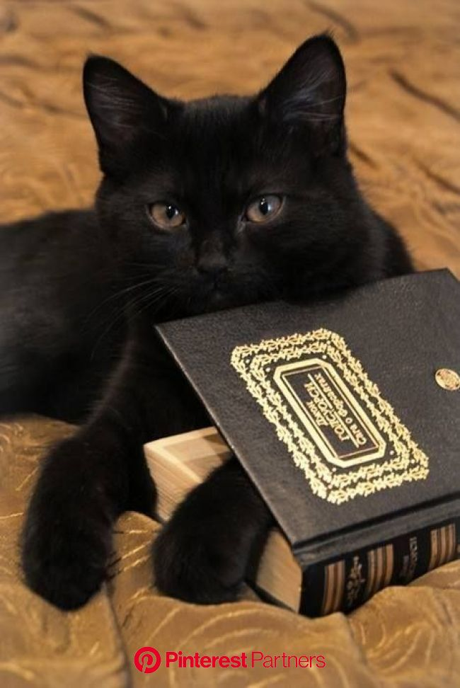 17 Cats That Take Their Bookmarking Job Seriously | Cats, Beautiful cats, Black cat