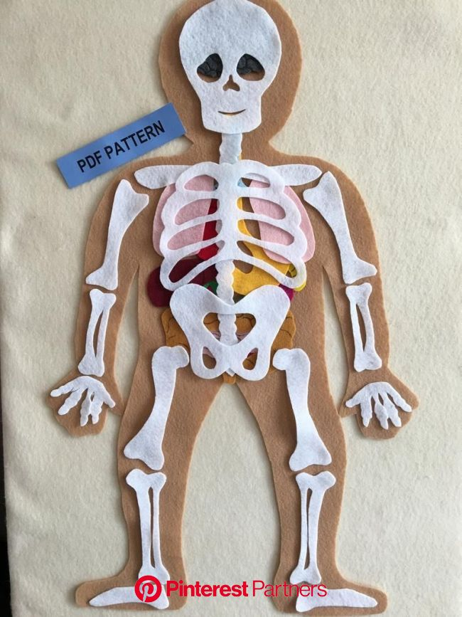 My Body Educational Felt Pattern, Bones and Organs, Montessori Inspired Educational Science Toy - PDF PATTERN ONLY | Science toys, Human body activiti