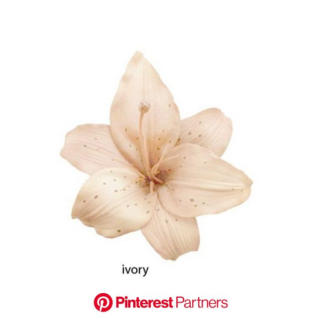 """4"""" Ivory Vintage Style Lilly Hair Clip for $7.00 