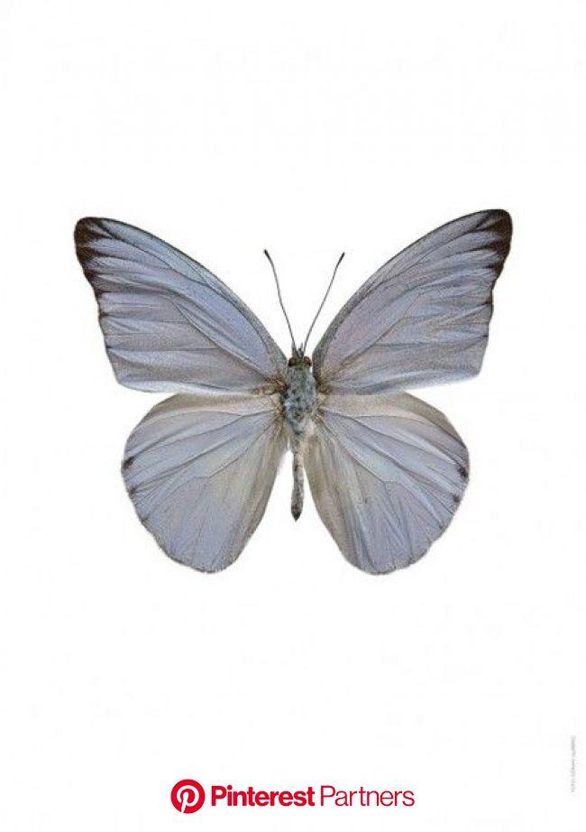 Appias celestina – LILJEBERGS | Cute icons, Butterfly art, Carrd stuff