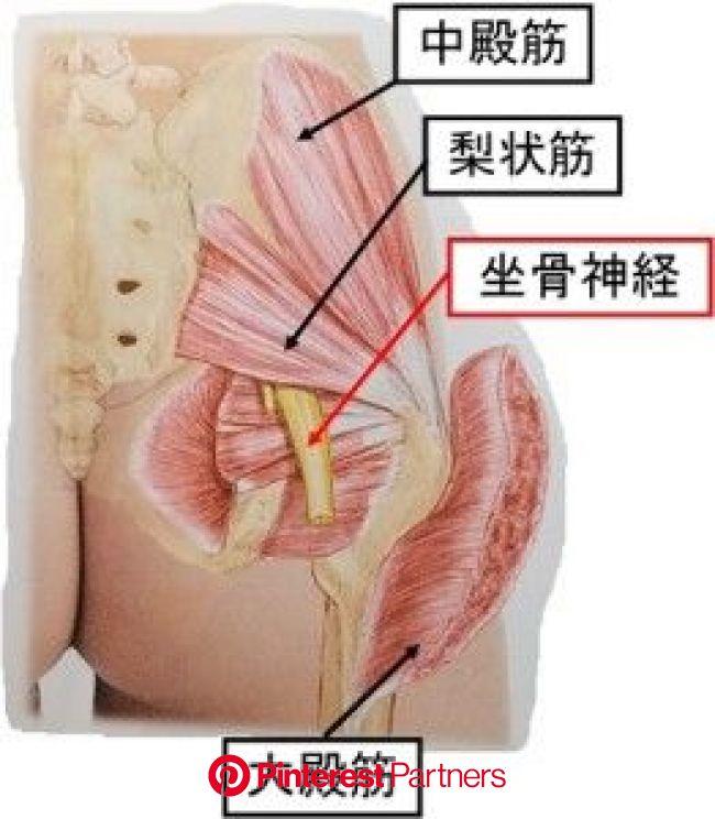 腰痛の原因はお尻のコリ!整体師が教えるたった10分で驚く程改善する方法とは?   梨状筋, 健康になる, 健康