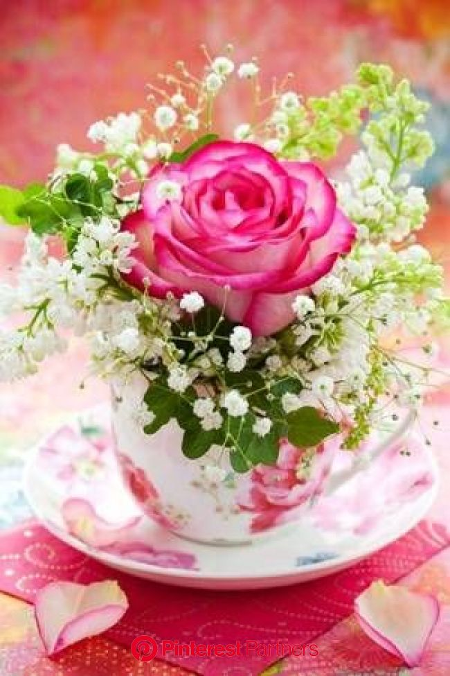 Picture of Pink rose and white lilac in a cup stock photo, images and stock photography. Image 12659531.   Flower arrangements, Rose arrangements, Tea