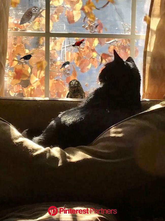 Autumn????  ????   ????????     ???? [Video] | Cats, Beautiful cats, Black cat
