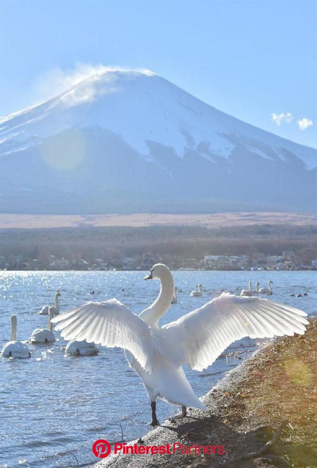 神々しく、幻想的 富士山   美しい場所, 風景, 美しい風景