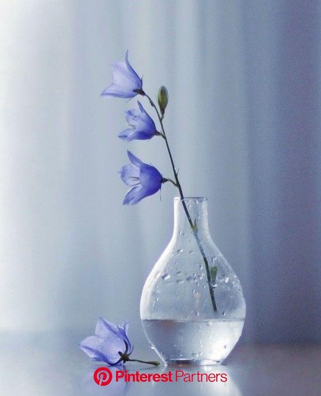 "500px / Photo ""Холодным вечером..."" by Liliya Larkina   Flowers photography, Nature photography flowers, Beautiful flowers"