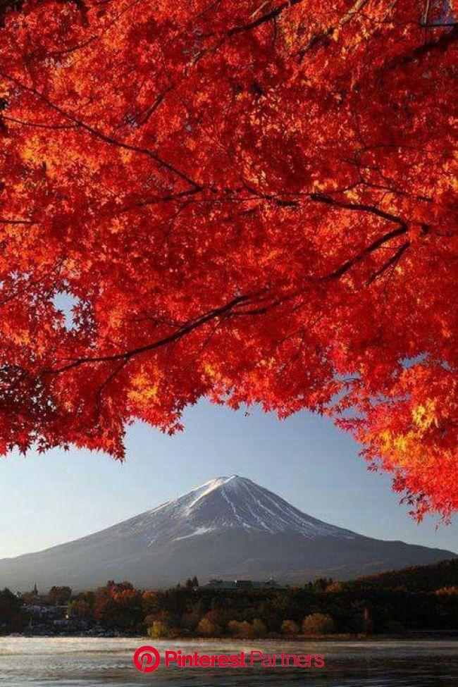 【海外の反応】 パンドラの憂鬱 海外「世界よ、これが日本だ」 日本の紅葉の美しさが別格だと海外ネットで話題に   紅葉 風景, 日本 名所, 美しい風景