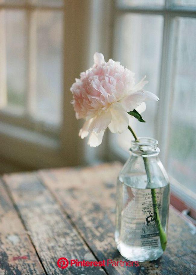 Vase dans une bouteille en verre   Beautiful flowers, Pretty flowers, Flower arrangements