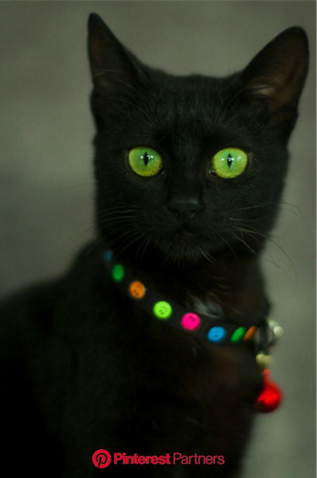Cher Cat | Pretty cats, Beautiful cats, Cats