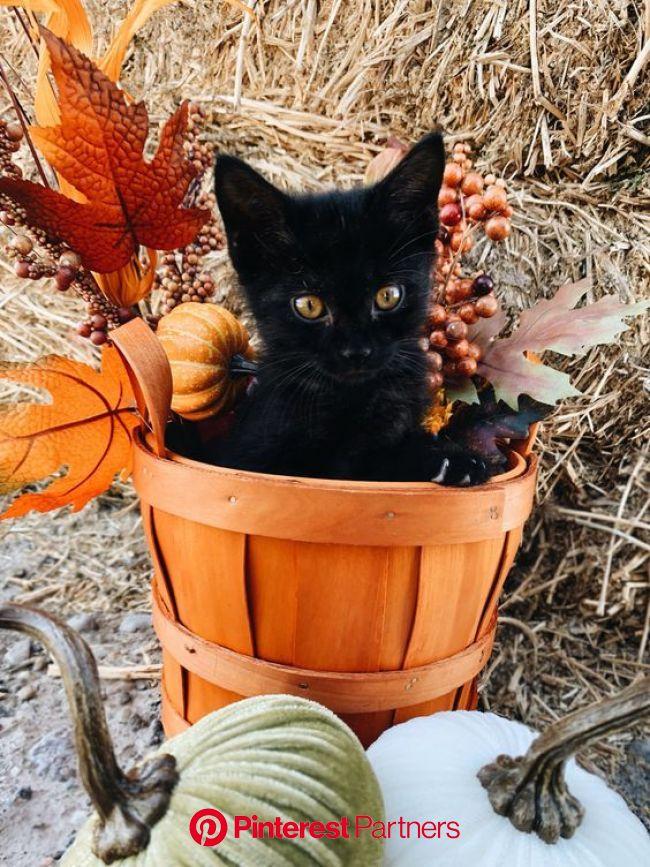 10 Cute Cats Enjoying The Fall Season [PICTURES] - CatTime | Fall season pictures, Halloween cat, Cute cats