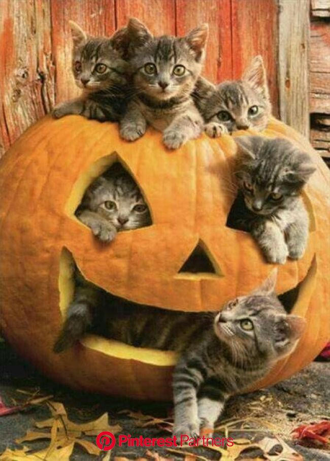 Myths And Legends: Why Cats Are Linked With Halloween - CatTime | Cute animals, Cats and kittens, Baby animals