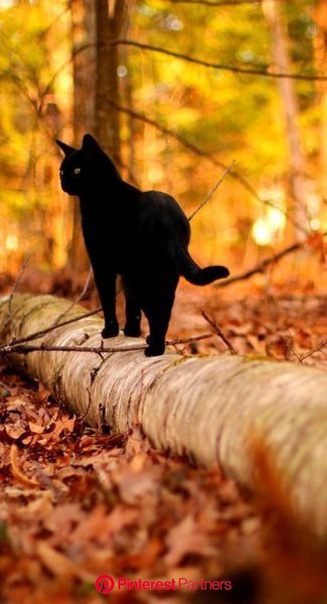 Simple Pleasures | Crazy cats, Cats, Beautiful cats
