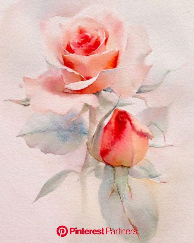 Розы... Художник - акварелист La Fe, Тайланд.: violika_1 — ЖЖ   Рисунки роз, Цветочные картины, Акварельные иллюстрации