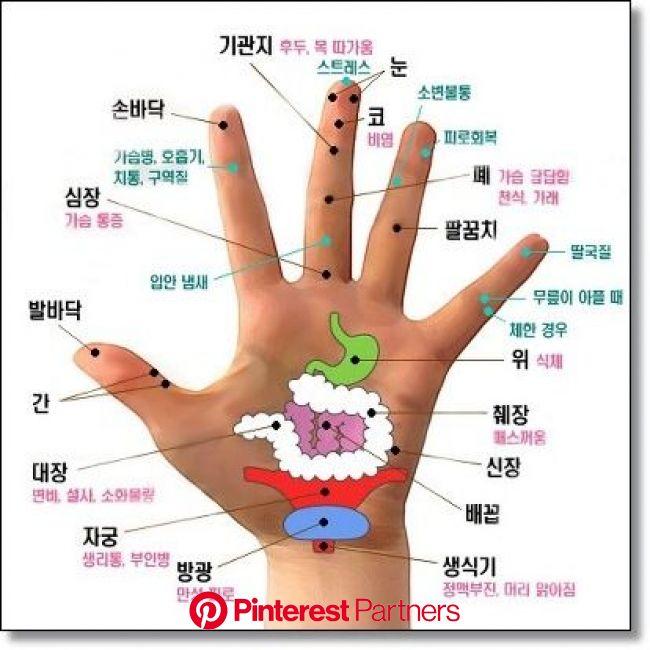 손바닥 혈자리 지압 으로 건강을 찾아요 | 지압, 반사요법, 침술