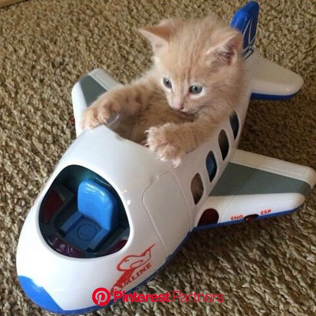 Tower, Requesting Permission to Take Off. | Kittens cutest, Cute animals, Baby animals