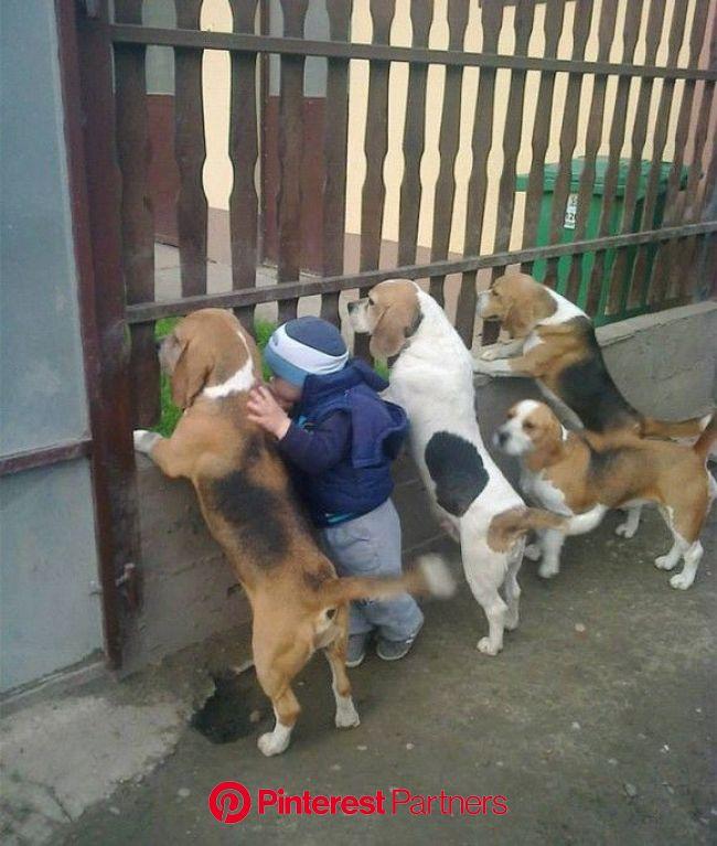 物心ついた時には側にいた。生まれて初めてできた親友だった。心震わす小さな子供とペットたちの思い出アルバム(画像あり) | ペット用品, ワンコ, 可愛い 動物