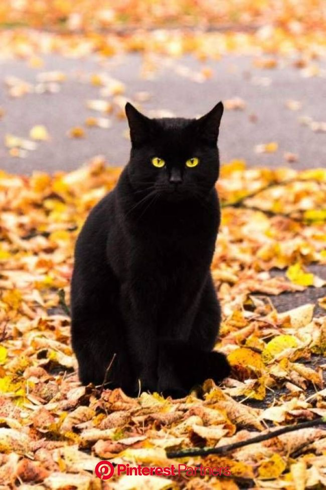 Don't you just know how handsome you look against the pretty Fall leaves! | Cats, Beautiful cats, Cute animals