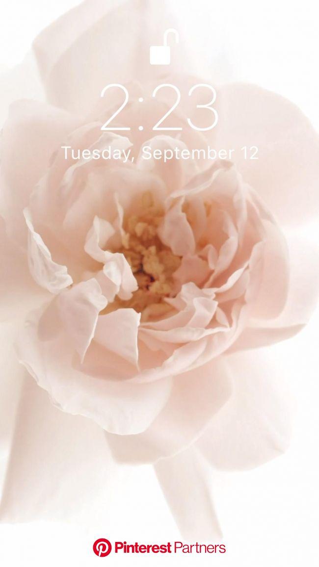 Flower ???? [Video] in 2021 | Iphone wallpaper, Galaxy wallpaper, Glitter wallpaper