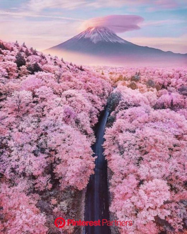 #富士山 #山 #桜 #ピンク   美しい自然の風景, 美しい場所, 綺麗な景色