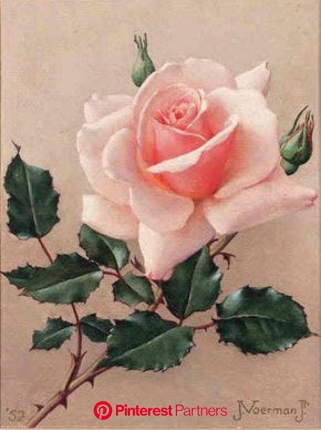 Jan Voerman jr. (Dutch, 1890-1976) - A Rose, oil on canvas, 21,5 x 17 cm. | Flower art, Flower painting, Rose painting