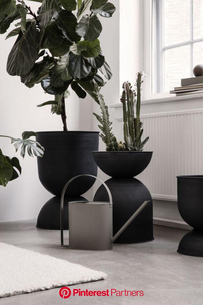 Black and beautiful (mit Bildern) | Indoor-garten, Wohnung pflanzen, Pflanzen dekor