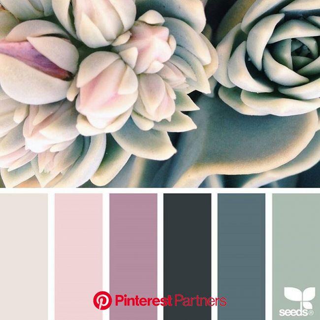 Color Setting | Seeds color, Design seeds, Color schemes