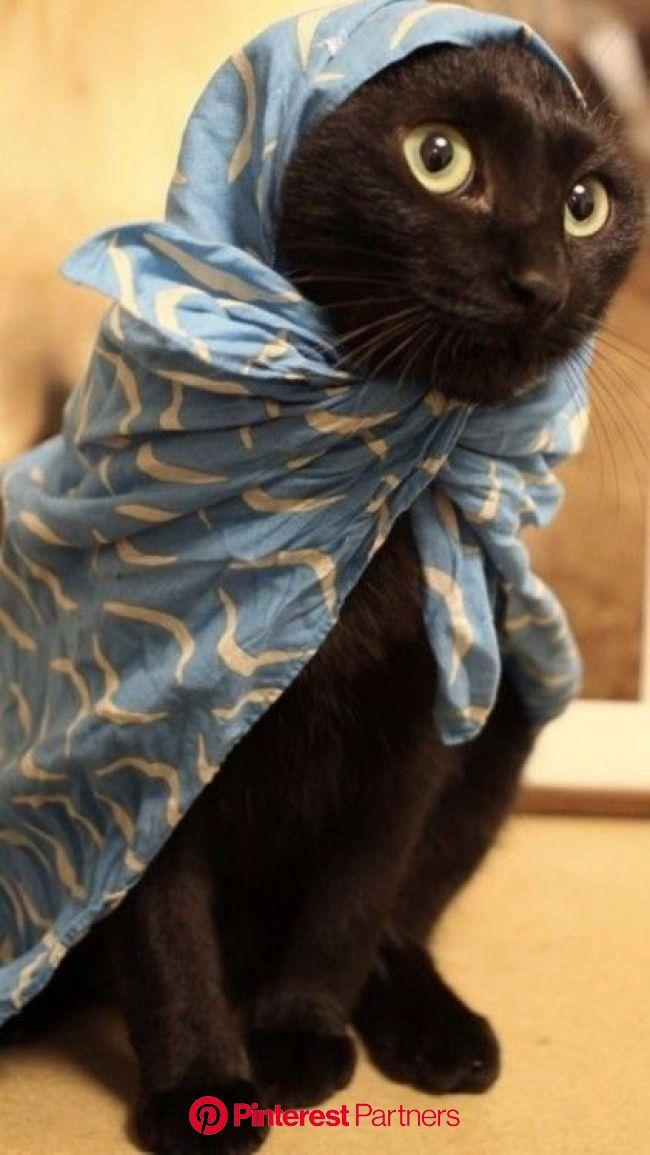 International Joke Day: 10 Of Our Favorite Corny Cat Jokes To Celebrate | Cute cats photos, Pretty cats, Beautiful cats