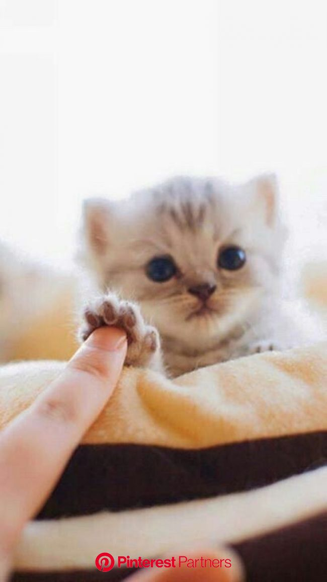 Kitten Season: What To Do If You Find Kittens - CatTime | Cute animals, Cute baby animals, Cute cats