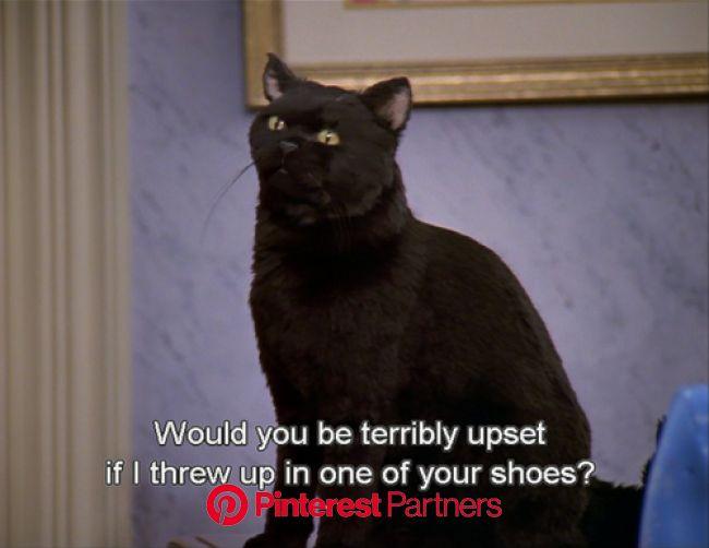 tomaskosauce | Salem cat, Sabrina cat, Salem saberhagen