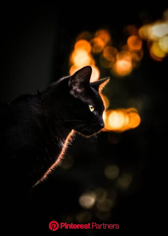 Rainbow Bridge Remembrance Day: 5 Ways To Memorialize Your Cat - CatTime | Cat photography, Cats, Crazy cats