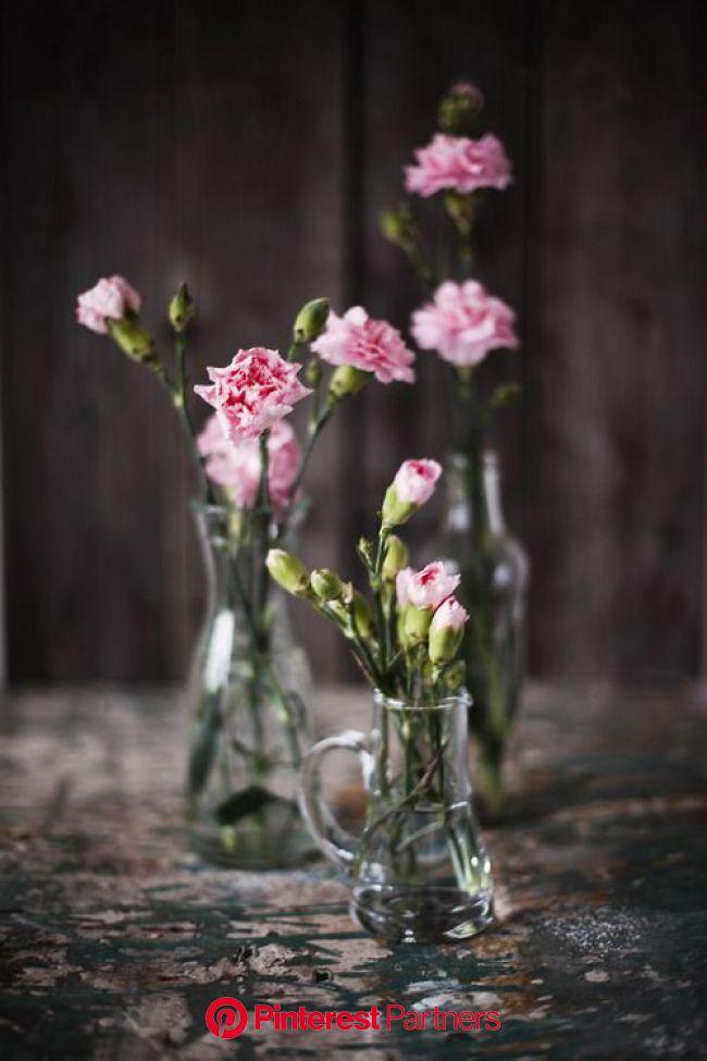 Patterson Maker   Beautiful flowers, Flower arrangements, Pink flowers