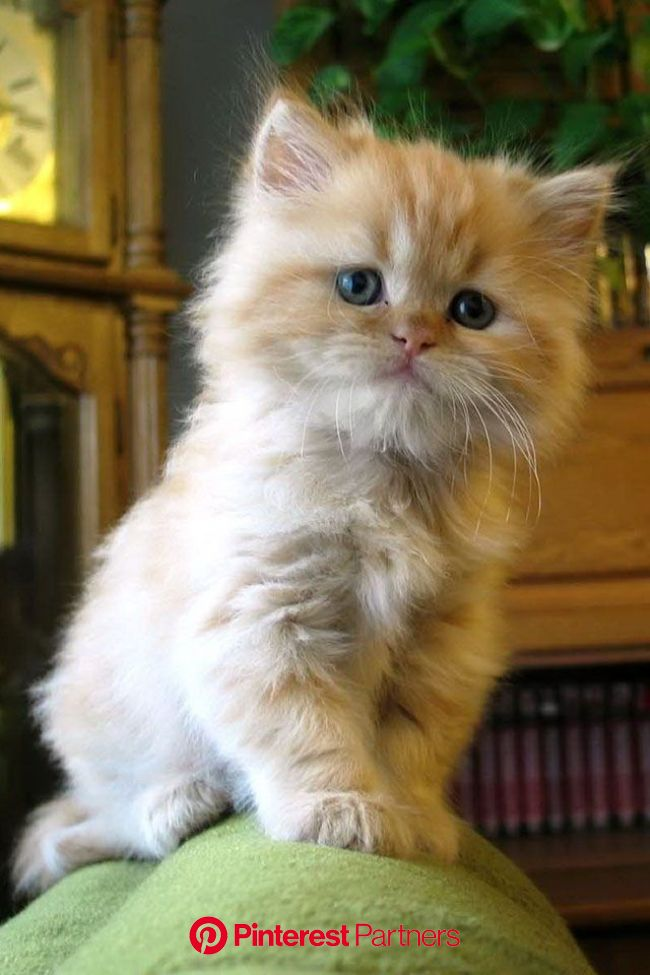 He looks surprisingly noble | Kittens cutest, Pretty cats, Beautiful cats