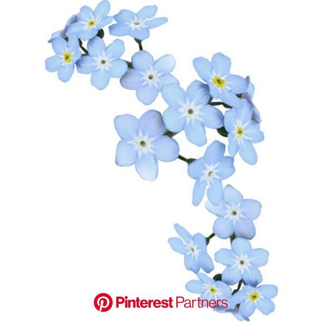 разноцветный чай | Flower graphic design, Flower graphic, Flowers