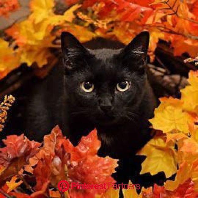Autumn Cats - 32 Images of Cats Loving Fall | Cat aesthetic, Beautiful cats, Cute cats